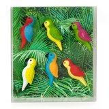 magneten papegaai