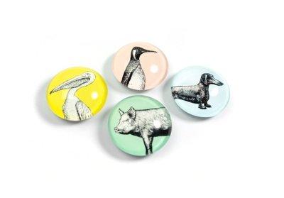 sterke dieren magneten glas