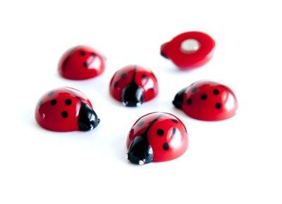 lieveheersbeestje magneten