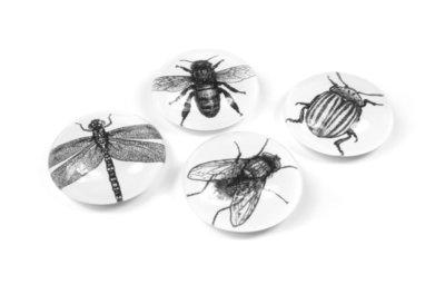 insecten magneten glas